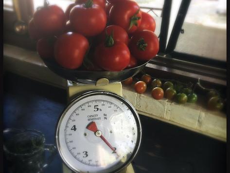 Passata Making - The Ghiggioli Family Recipe