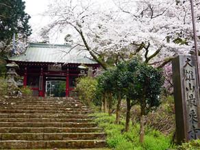 大雄山最乗寺に桜を見に行ってきました