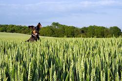 DogVille Grass 1