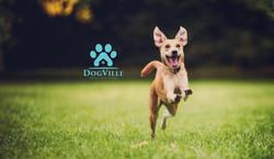 Happy Dog Logo 1