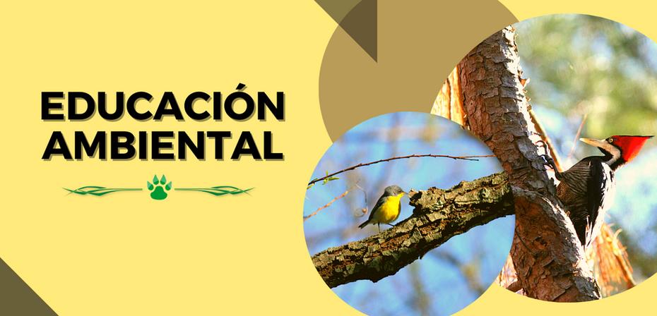 SolapaEducación Ambiental.png