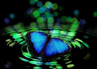 butterfly-492536_1920.jpg