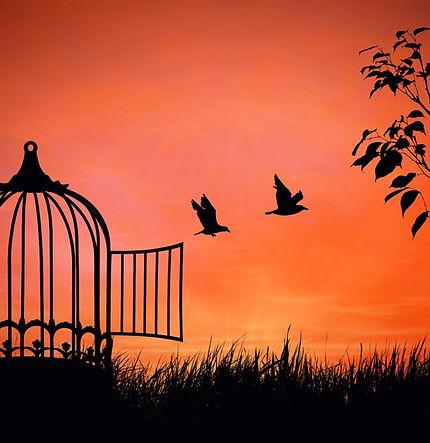 freedom_birdcage.jpg