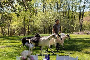 Goats CHI.jpg