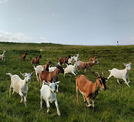 Gap Mountain Goats Meet Our Members.jpg