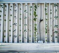hydroponics-917285_1920.jpg