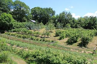cheshire garden.jpg