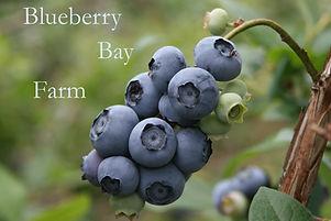 blueberry bay farm.jpg