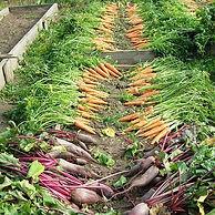 harvest-vegetable-garden-elitexpo.jpg
