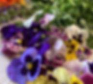 Terra Basics Photo.jpg