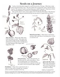 c.p. 2020 Traveling Seeds NOFA-NH.png