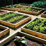 raised bed garden.jpg