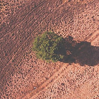 Plant-Drought-Field-Dry-Tree-Nature-Land