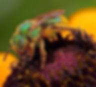 Bee Bill.jpg