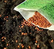 seeds-1302793_1920.jpg