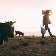 cow farmer sunset.jpg