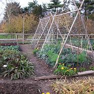 vegetable garden.jpg