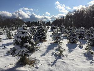 windcrest farm winter.jpg