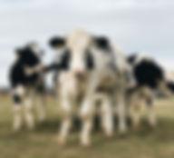 alaina-mclearnon-1241419-unsplash.jpg