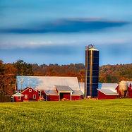 dairy-farm-4019962_960_720.jpg
