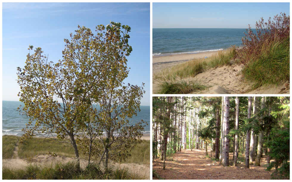Hitting the Beach in the Fall - Saugatuck Dunes State Park