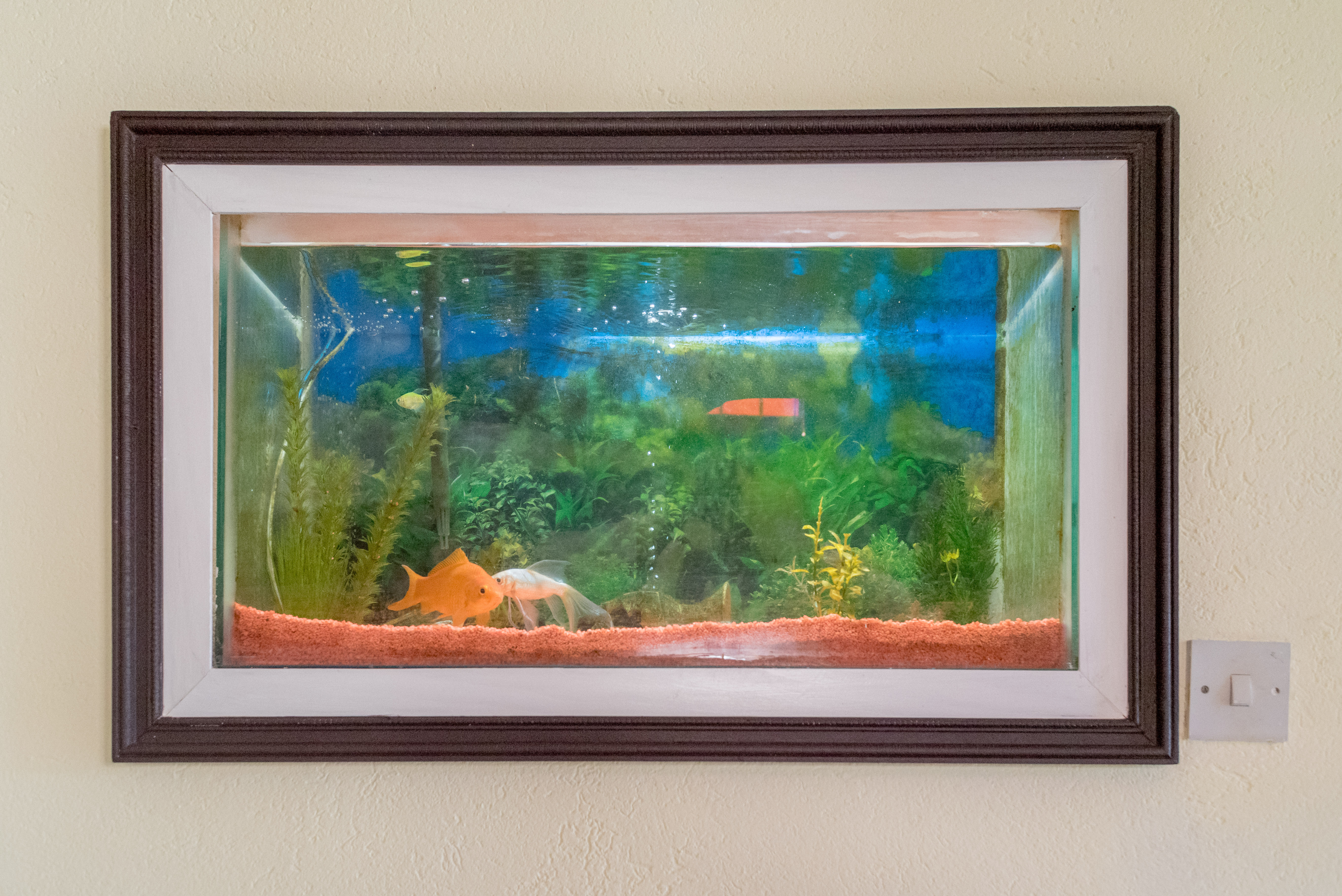 EMERALD LIVING | Built-in Aquarium