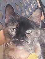 Lilly 2.jpg