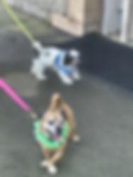 Dogs-IMG_3993.jpeg