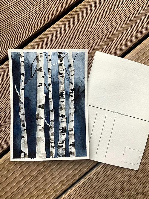 Birch trees postcard
