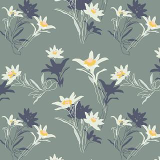 Edelweiss2.jpg