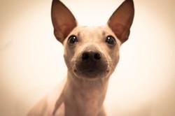 chien-autre-598295241