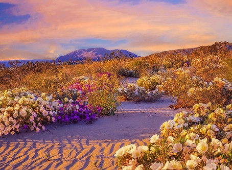 Great Things in the Wilderness: A Desert in Bloom