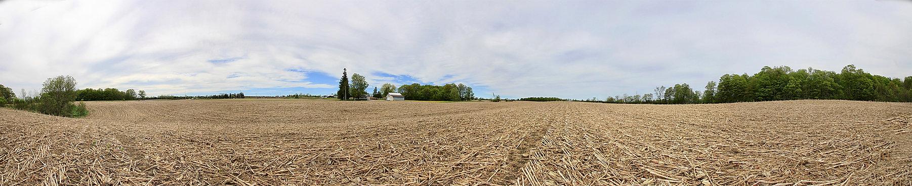 Farm corn field - for sale