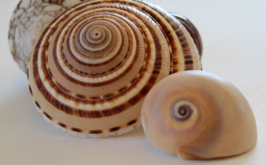 Inspiration-J:  Closer view of shell patterns