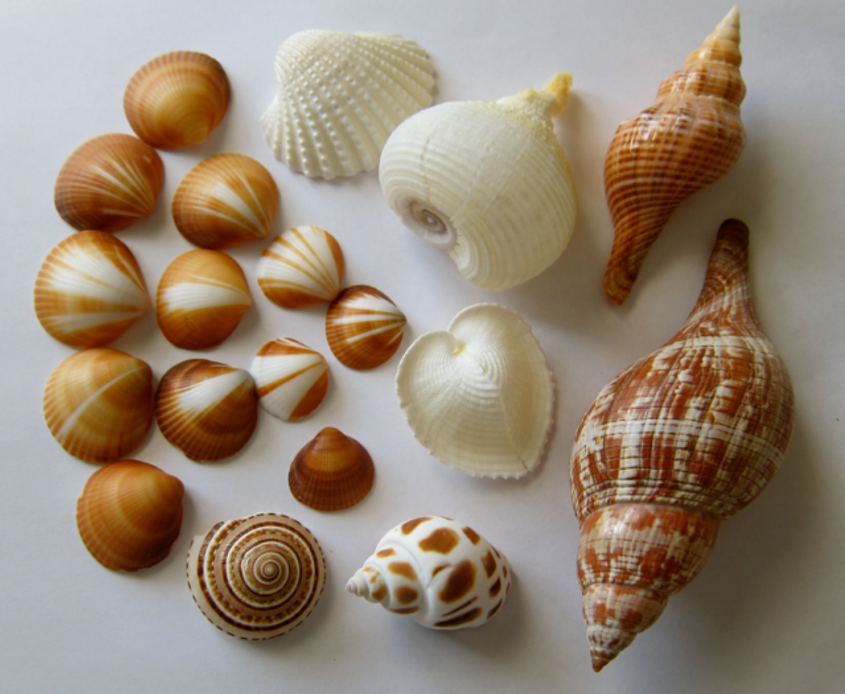 Inspiration-J:  Shell arrangement