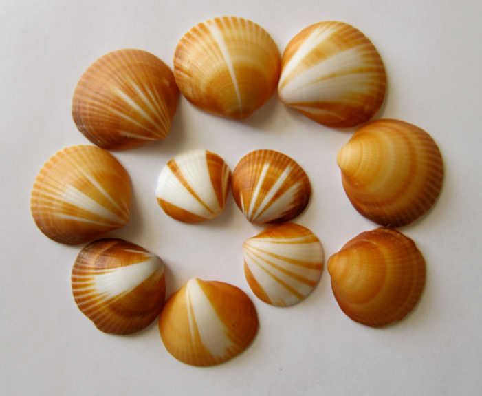 Inspiration-J:  Shell collection