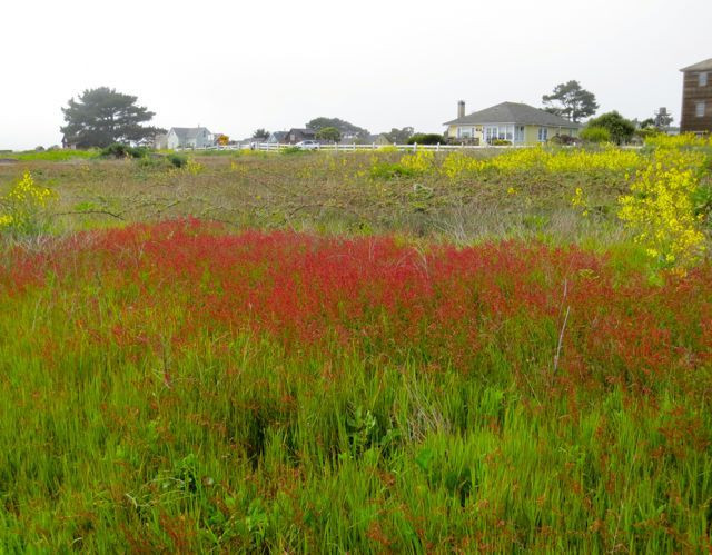 A swath of red enhances the seaside landscape. Photo by Darra Williamson.