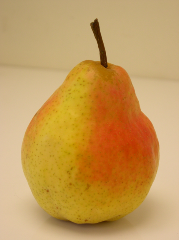 Inspiration-J:  Pear image for pillow project