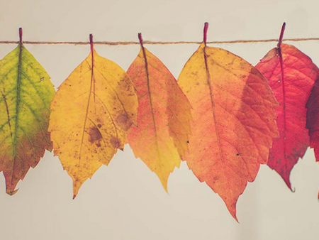Fall is here and so are we!