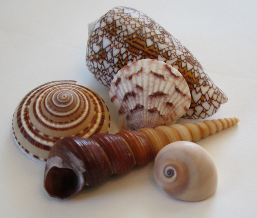 Inspiration-J:  Shell ensemble
