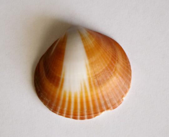 Inspiration-J:  Shell 1