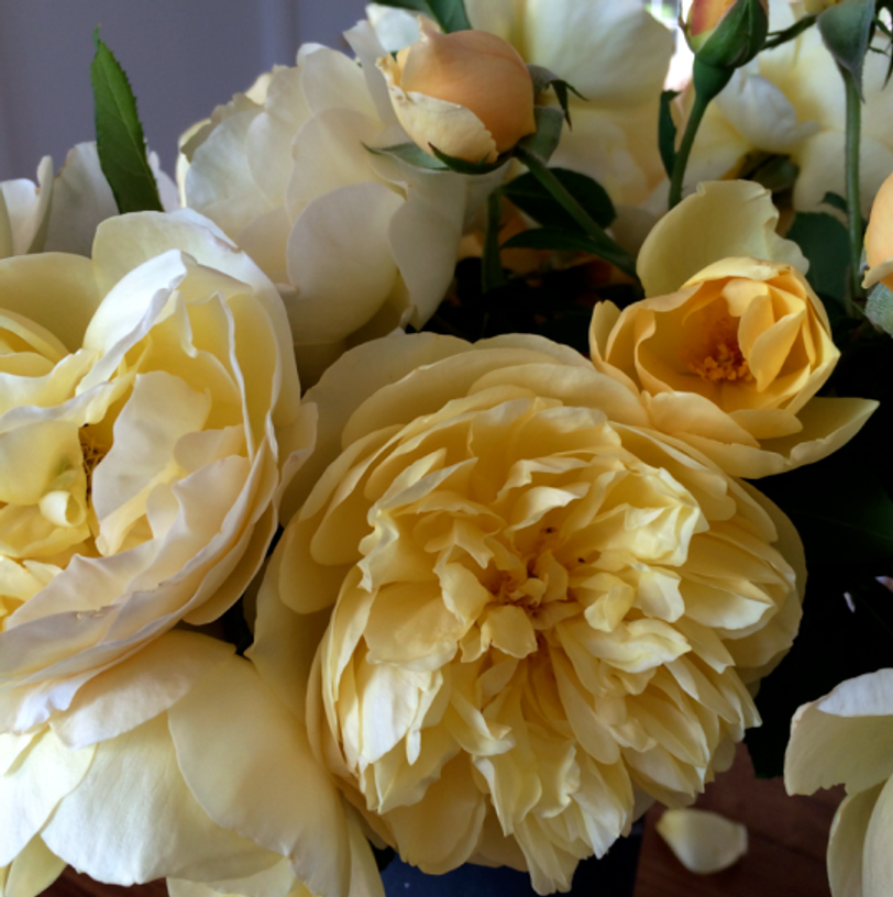 Beautiful summer roses, just for fun. Sadly, not from garden but from a friend's.