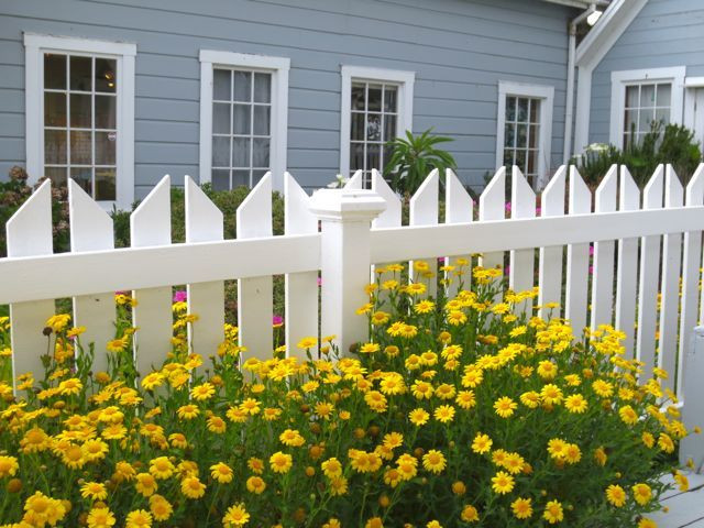"""Floral """"sunshine"""" dresses a white picket fence. Photo by Darra Williamson."""