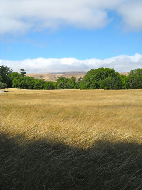 The golden hills near Point Reyes Station