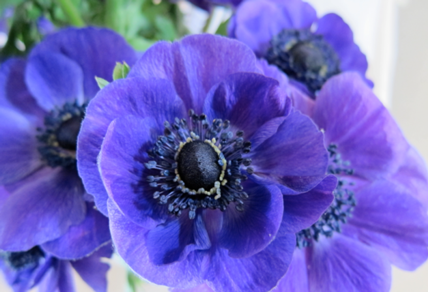 Inspiration-J:  A passion for purple