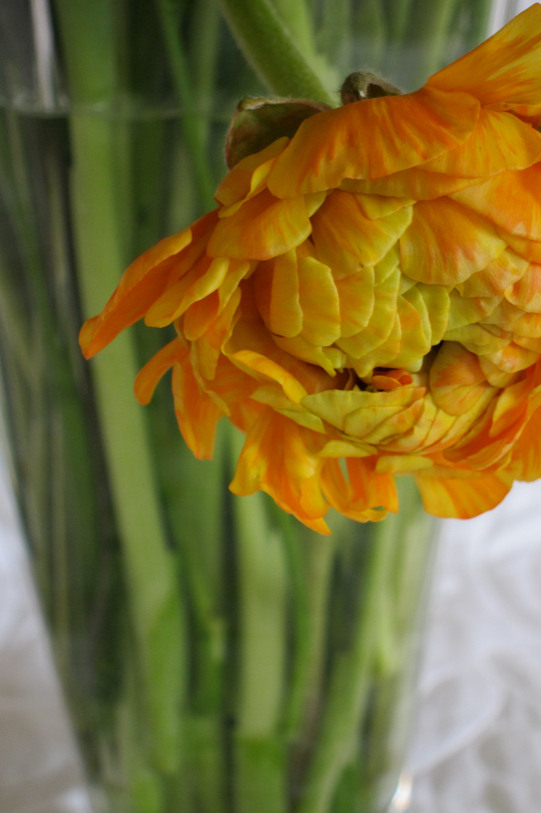 One element of a design--a ranunculus blossom.