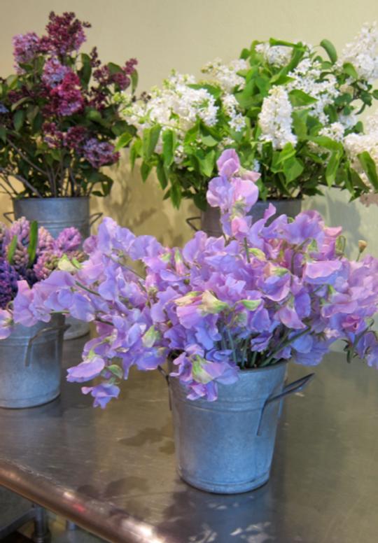 Inspiration-J:  Purple-Hued Blossoms