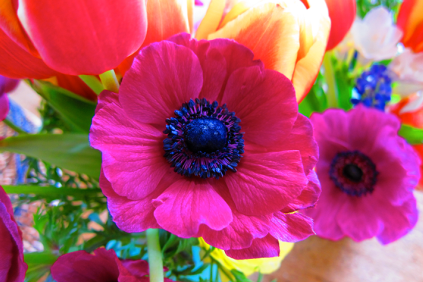 I always like to open on a floral note--an anemone I photographed about 100 times trying to catch the incredible fuchsia color. This was the most successful shot.