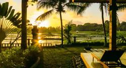 Green field Ubud - I Love Bali (94)