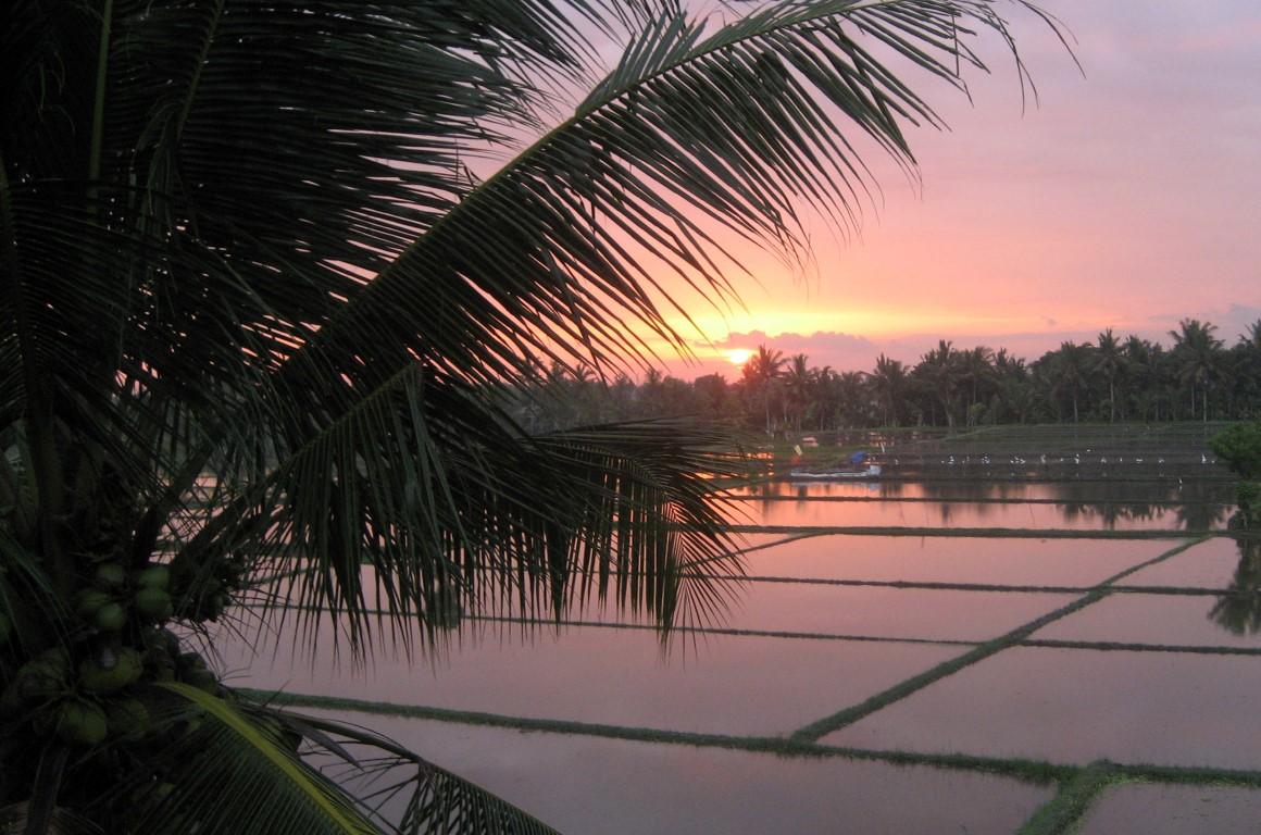 Green field Ubud - I Love Bali (63)